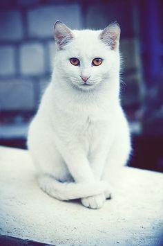 Photographer Dmitry Adamenko – cats {Part 2}