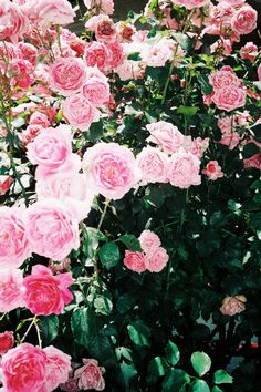roses  http://juliegallaher.com/post/30978844210/nyc-nyc-nyc