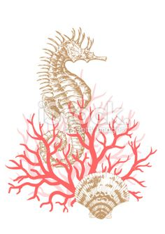 Seahorse, Coral and Shells Royalty Free Stock Vector Art Illustration