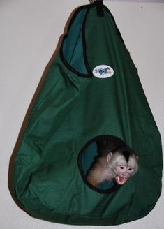 Horse hay bag as monkey hideout - Primate Care Primates, Mammals, Zoo Animals, Cute Animals, Horse Hay, Zoo Project, Pet Monkey, Baby Horses, Raccoons