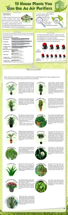 This chart is great. I have many and more of these plants in my book.  15 air purifying house plants. Variegated Spider Plant - GREAT indoor plant for removing carbon monoxide and other toxins or impurities. Spider plants are one of the three plants NASA deems best at removing formaldahyde from the air** Easy to Grow - Cleans the Air -