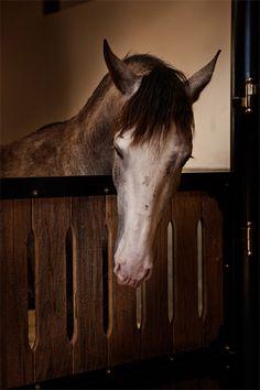 Haras do Drosa - Cavalos
