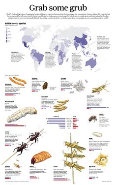 Edible Insects Species around the World