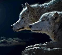 Don't Cry Wolf!