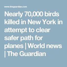 Nearly 70,000 birds killed in New York in attempt to clear safer path for planes | World news | The Guardian
