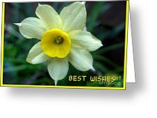 Narcissi Greeting Greeting Card by Joan-Violet Stretch