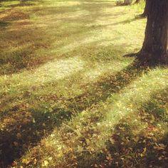 Good morning :)  日に日に秋が深まります。  素敵な週末を♩ - @yocca- #webstagram