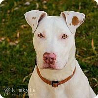 The Davinci Foundation for Animals RESCUE ACROSS THE NATION: Roxy - Neenah, WI