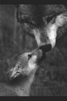wolfy pup and mama