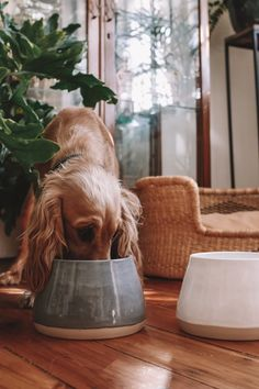 Benji + Moon's ceramic Long-Ear or Spaniel Dog Bowls are perfectly designed to keep long ears clean and dry. Our sleek and modern ceramics range is also a much healthier alternative to plastic bowls. Visit our online pet shop for more details. Cute Dog Bowls, Large Dog Bowls, Dog Food Bowls, Pet Bowls, Large Dogs, Dog Home Decor, Ceramic Dog Bowl, Dog Bowl Stand, Dog Area