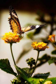 What a pretty photo by DJ Pettitt!