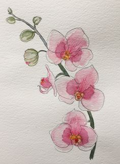 Orchidea, watercolor - wc starter - Orchidea, watercolor You are in the right place about cactus Here we offer you the most beautiful p - Pen And Watercolor, Watercolor Illustration, Watercolor Flowers, Water Paint Flowers, Painted Flowers, Watercolor Ideas, Orchid Drawing, Watercolor Paintings For Beginners, Beginner Painting