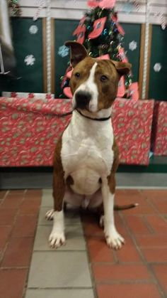 """1/2 NEEDS HOME NOW!!!! Lovables: """"ERNIE"""" is DESPONDENT/ DEPRESSED …am I am even worth READING ABOUT? SHARING? ADOPTING … I guess we'll see ….  ★★ PLEASE don't ignore me … PLEASE don't pass me by … My STORY is a SAD one but it can have a happy ending if you will SHARE ME …. & that one special someone who sees me & KNOWS … that I am the boy for them!! ★★  **PLS CLICK ON ERNIE'S PHOTO & READ HIS STORY..Help him SHARE/ RESCUE/  ADOPT SWEET ERNIE!!!"""
