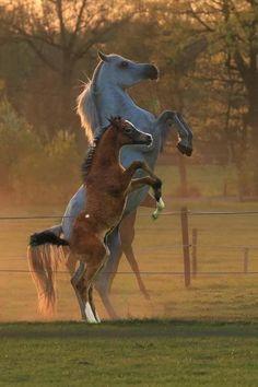 Together Horses