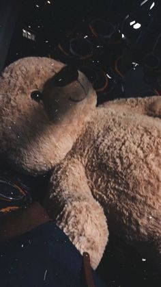 """Teddy bears and """"I'm sorry"""" letters Don't seem to make things better 🧸 by """