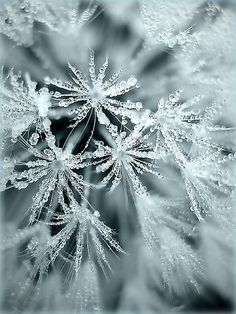 Snowflakes or snow crystals form when ice crystals freeze around tiny particles of dust that are in the air, and join together as they fall. Ice crystals that melt as they fall become rain. Ice crystals that form near the ground are called frost.