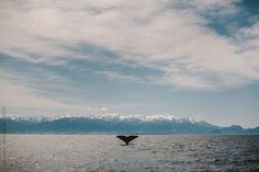 whale by petermeciar | Stocksy United