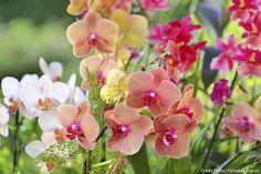 #orchidee #detentejardin #jardinage #maison #décorationmaison Terrarium, House Plants, Orchids, Exotic, Nature, Commerce, Perception, Aquarium, Composition