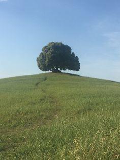 Drzewo życzeń Toscania
