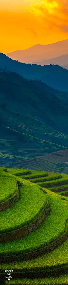 Sunset of Rice Terrace... Vietnam
