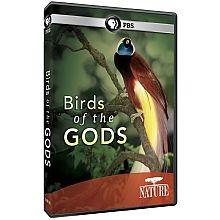 NATURE: Birds of the Gods DVD - shopPBS.org