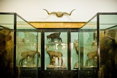 SIGHTS. National Museum Of Natural History. Being the first and the richest natural history museum on the Balkans, the National Museum of Natural History in Sofia (NMNHS) studies, preserves and disseminates information about the living and non-living nature both in Bulgaria and throughout the
