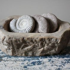 Wabi Sabi ~Fossils ~ I have a large collection of fossils. I've been collecting for a long, long, time.