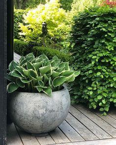 Garden Cottage, Garden Pots, Home And Garden, Balcony Design, Garden Design, Landscaping Plants, Outdoor Plants, Green Flowers, Garden Inspiration