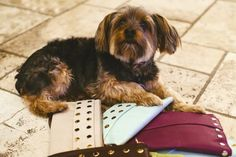 Charlie wants Hammitt LA's new clutch in all colours! #hammittla