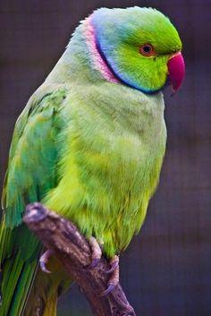 our-amazing-world:  Lovely bird, Indian Amazing World beautiful amazing