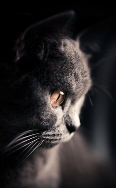 Focus... Puppies And Kitties, Cute Kittens, Cats And Kittens, I Love Cats, Cool Cats, Beautiful Cats, Animals Beautiful, Animals And Pets, Cute Animals