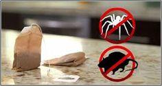 Vous n'aurez besoin que d'un sachet de thé et vous ne verrez plus jamais de souris ou d'araignées dans votre maison !
