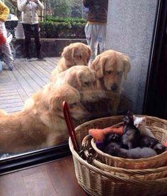 They look like dad's looking in the nursery window