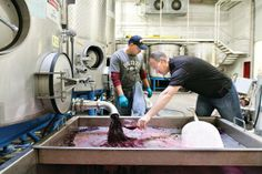 This year, Washington State wine growers have really outdone themselves. Last year's harvest was record breaking, but this year they've already crushed that record by 16%.