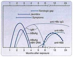 Hepatitis B - STEP1 Microbiology - Step 1 - Medbullets.com