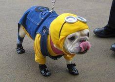 MINIONS dog costume Halloween Minion Despicable Me