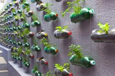 http://ambientebio.it/wp-content/uploads/2012/07/vasi_bottiglie-di-plastica.jpg