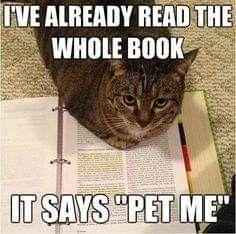 Funny Animal Memes, Cute Funny Animals, Animal Quotes, Funny Animal Pictures, Funny Cute, Cute Cats, Hilarious, Funniest Animals, Funny Kitties