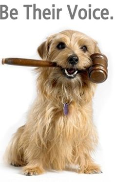 ASPCA - Join, help to fight for laws against animal cruelty. SPCA in South Africa. RSPCA in Australia Animal Cruelty Laws, Animal Rescue, Animal Protection, Shelter Dogs, Rescue Dogs, Animal Welfare, Animal Rights, Humane Society, I Love Dogs