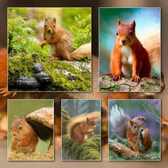 Zoo Animals, Animals And Pets, Group Of Dogs, You Are Special, Moody Blues, Illusion Art, Squirrels, Color Pallets, Colleges
