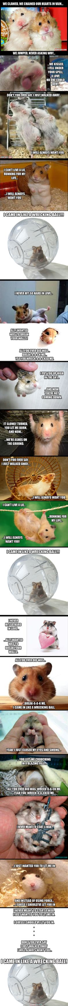 Wrecking Ball (Hamster Edition) – 20 Pics -Funny stuff (at least in my opinion) Crazy Cat Lady, Crazy Cats, It's Funny, Hilarious, Animal Pictures, Cute Pictures, Funny Animals, Cute Animals, Taylor York