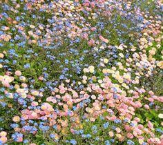 - ̗̀ plants are friends ̖́- Spring Aesthetic, Nature Aesthetic, Flower Aesthetic, Aesthetic Pastel, Aesthetic Dark, Aesthetic Grunge, Aesthetic Vintage, Pretty Flowers, Wild Flowers