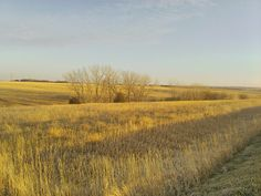Beautiful Nebraska... couldn't help myself and had to take a picture...