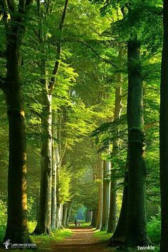 Travel Discover Mother nature photography paths 53 Ideas for 2019 Forest Path Tree Forest Forest Road Forest Scenery Beautiful World Beautiful Places Beautiful Forest Amazing Places Beautiful Scenery Forest Path, Tree Forest, Forest Road, Forest Scenery, Tree Tree, Tree Bark, Foto Nature, Tree Tunnel, Walk In The Woods