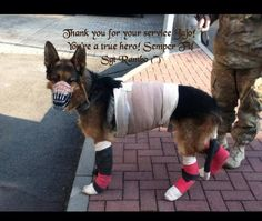 Thank you for your service Sgt Rambo x Military Working Dogs, Military Dogs, Police Dogs, Malinois, Wounded Warrior, War Dogs, German Shepherd Dogs, German Shepherds, Shepherd Puppies