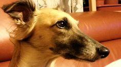 Awi ♡ Dogs, Animals, Nature, Animales, Animaux, Pet Dogs, Doggies, Animal, Animais