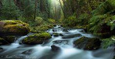 My Secret Paradise - Pure Nature by Thomas Dawson, via 500px