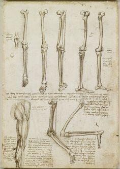Leonardo Da Vinci anatomical sketches/drawings ca. Leg Anatomy, Anatomy Study, Anatomy Art, Anatomy Drawing, Anatomy Reference, Human Anatomy, Knee Joint Anatomy, Anatomy Bones, Michelangelo
