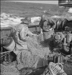 The Mate and Third Hand mend the net on board the SS RIGHTO, a North Sea fishing trawler, operating from Grimsby in Lincolnshire. Both are wearing raincoats and sou'westers, and the sea looks quite choppy. Lincolnshire England, Old Fisherman, Fishing Vessel, Willow Weaving, Merchant Navy, Sea Fishing, Historical Photos, Old Photos, American History