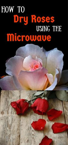 Awesome diy flowers hacks are available on our internet site. look at th s and you will not be sorry you did. Flower Crafts, Diy Flowers, Flower Art, Paper Flowers, Pressed Roses, Drying Roses, How To Preserve Flowers, Preserving Flowers, How To Dry Flowers